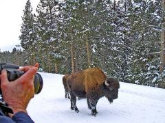 Yellowstone winter tour  by snowmobile