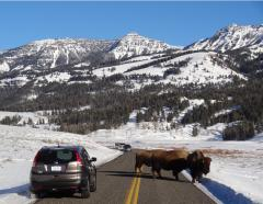 Yellowstone tours in the winter